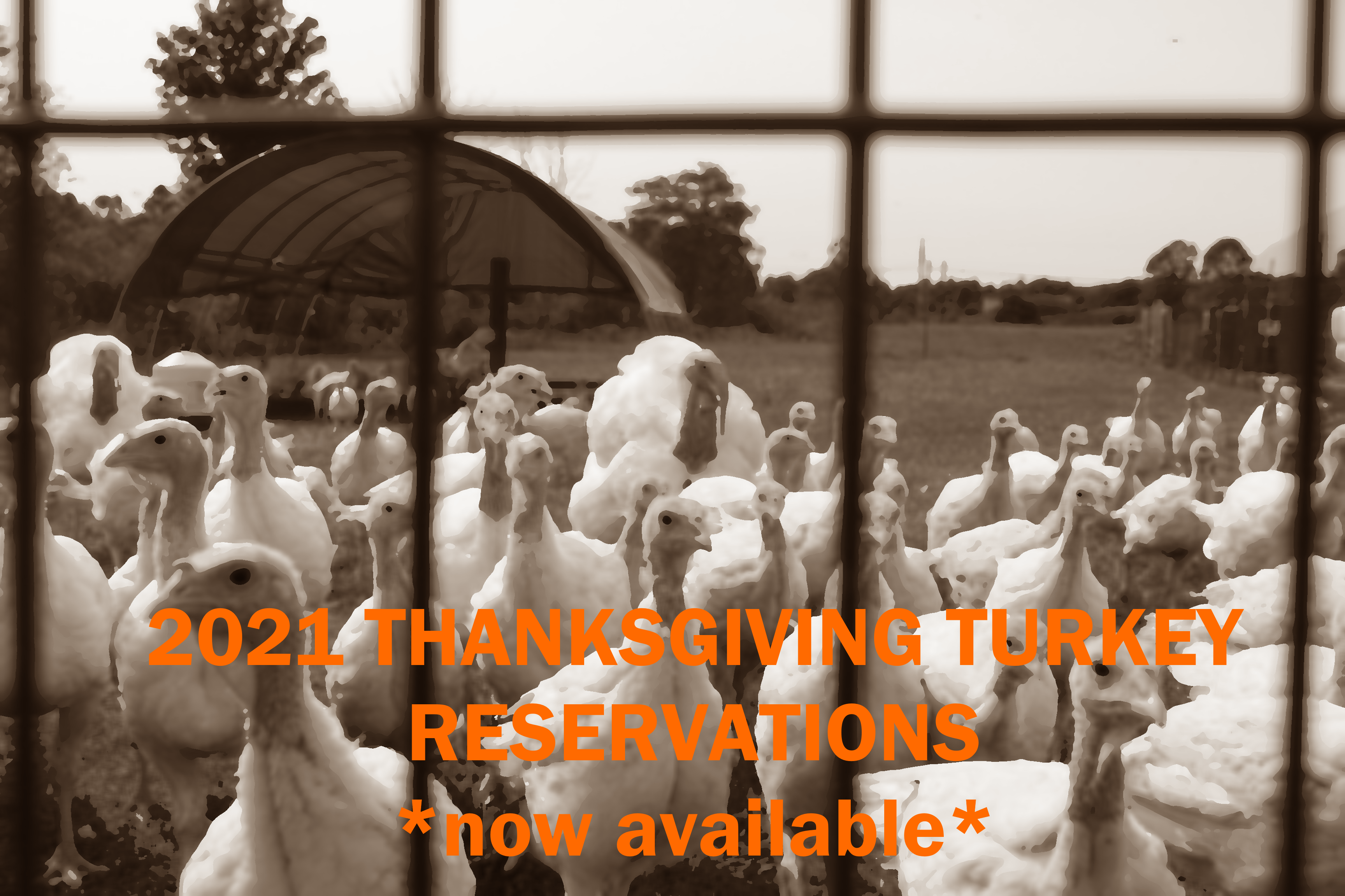 Click here for Turkey Reservations!